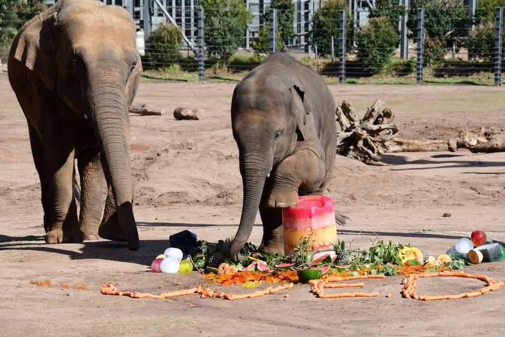 Zoológico de Taronga Western Plains celebra el Día del Elefante