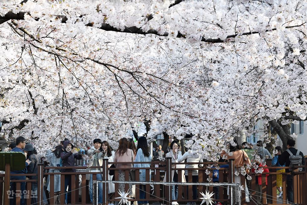 Cherry blossoms bloom in Tokyo