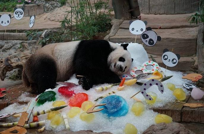 Giant panda Chuang Chuang dies at Chiang Mai zoo