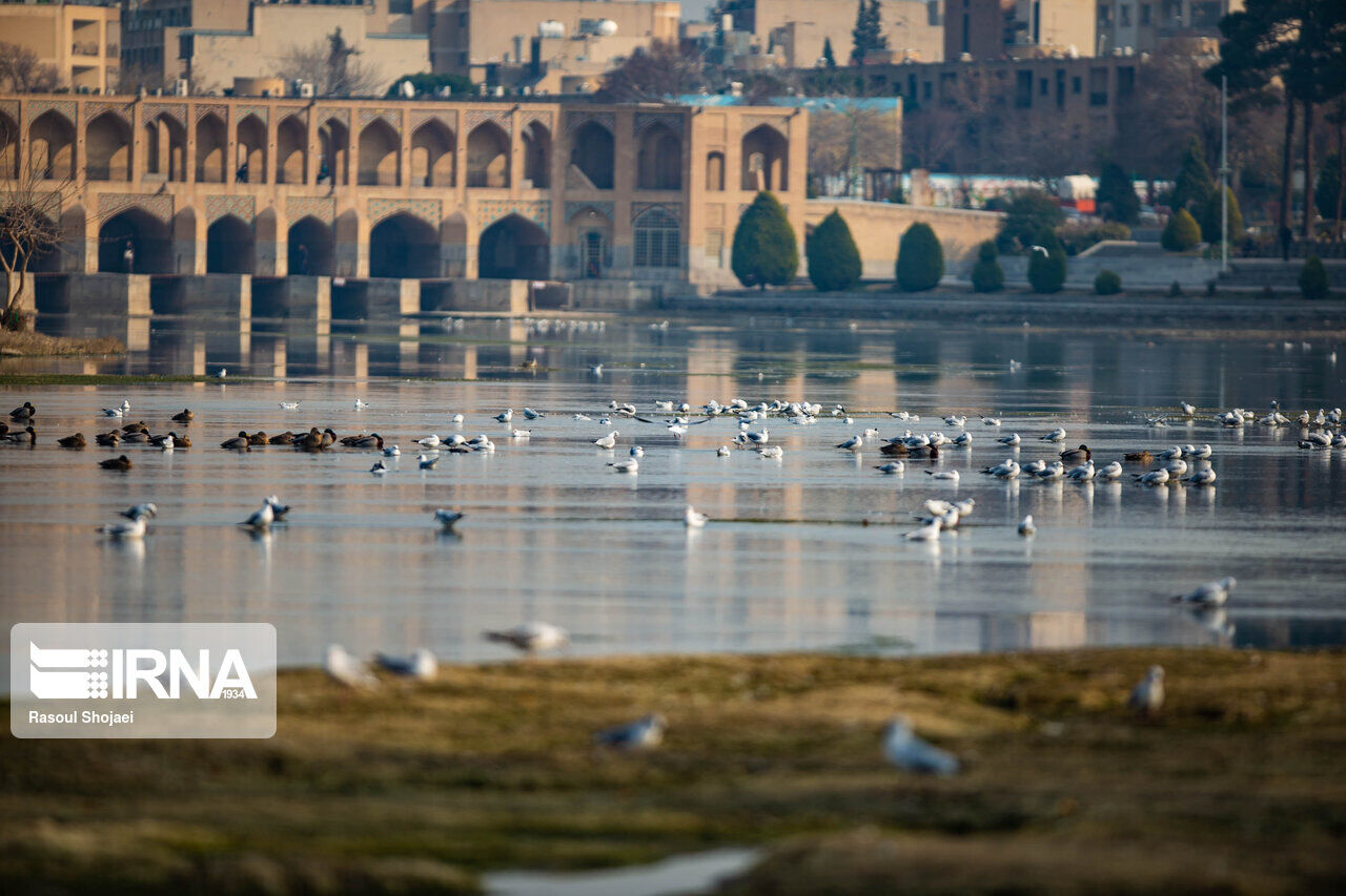 Migratory Birds Select Zayandeh Rud As Resort For Winter Season