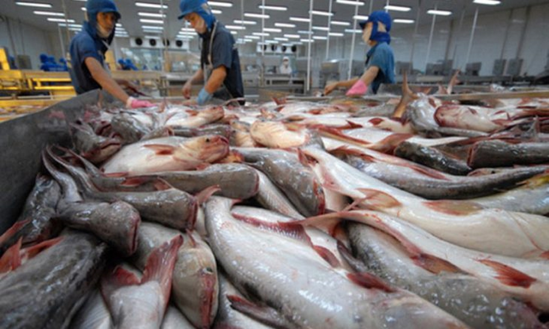 Feature: Israeli Closure Of The Only Commercial Crossing, Inflicts Huge Losses On Gazan Fish Farms