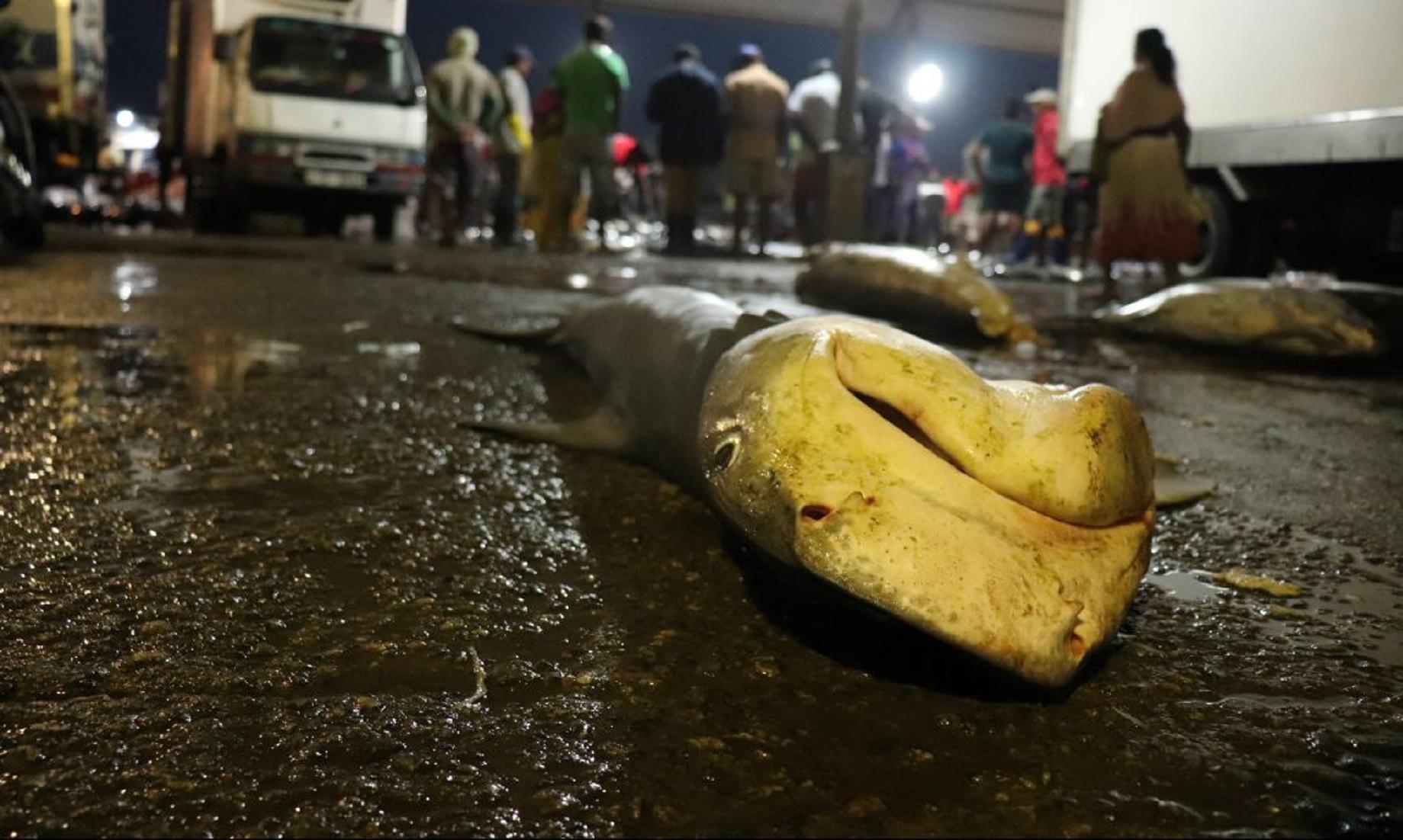 Sri Lanka To Probe Illegal Shark Fishing In Famous Tourist Spot